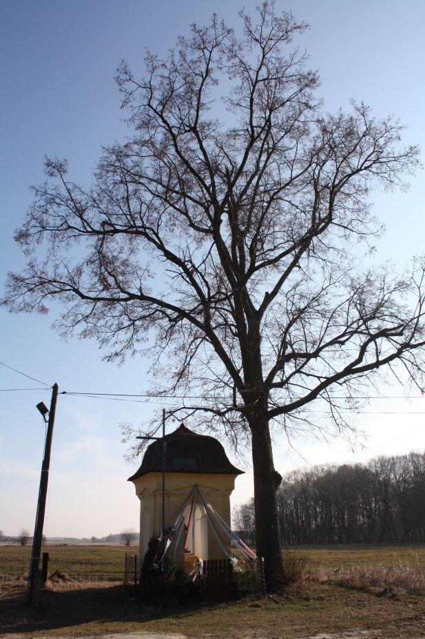 2019-02-28 Wielka Wola kapliczka nr1 (23)