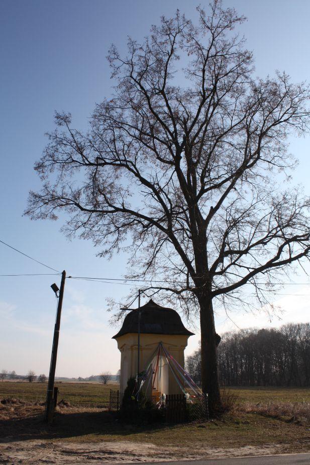 2019-02-28 Wielka Wola kapliczka nr1 (24)