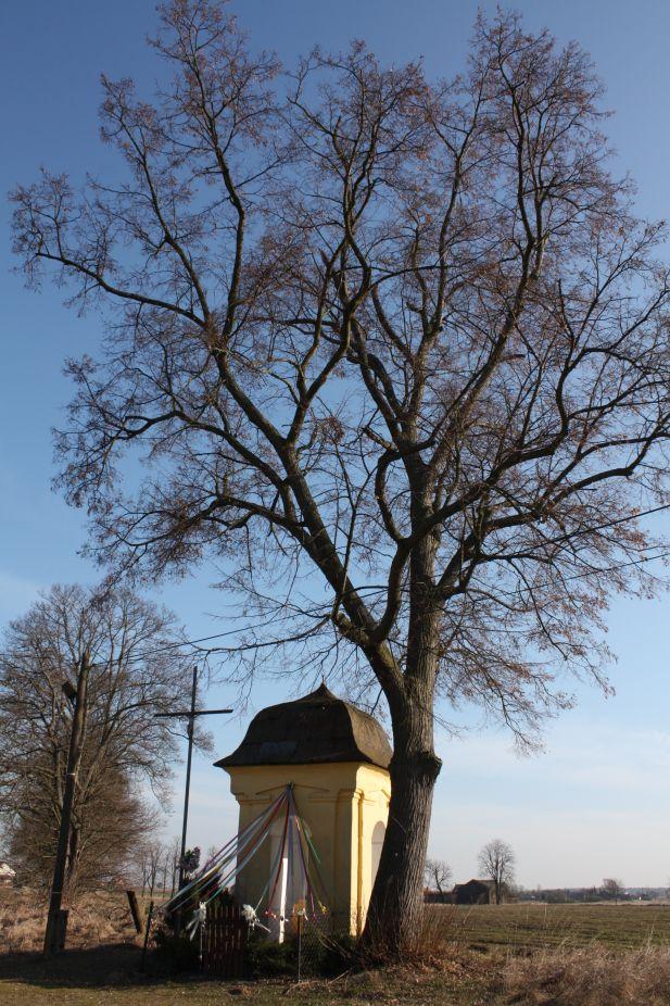 2019-02-28 Wielka Wola kapliczka nr1 (25)