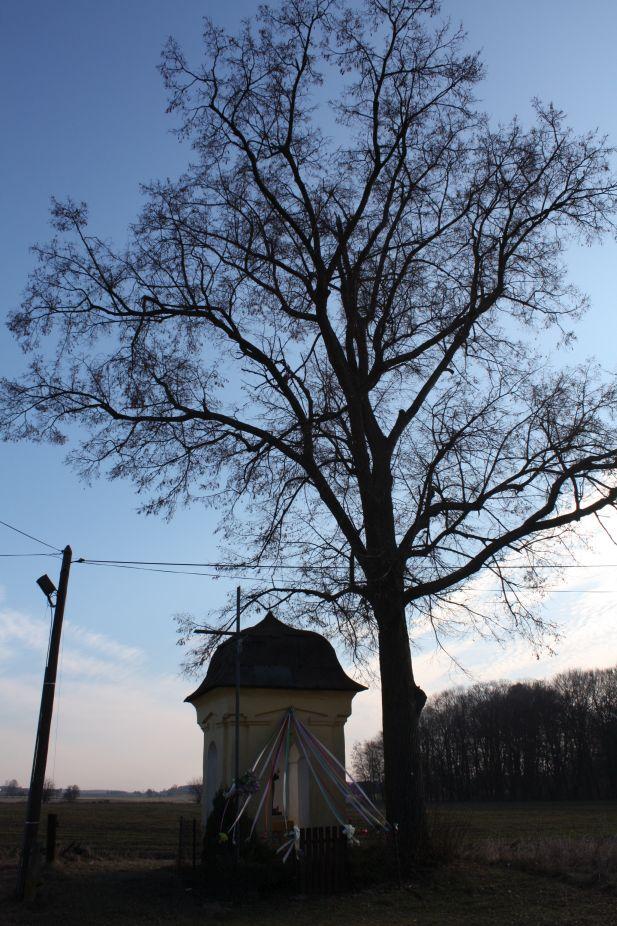 2019-02-28 Wielka Wola kapliczka nr1 (3)