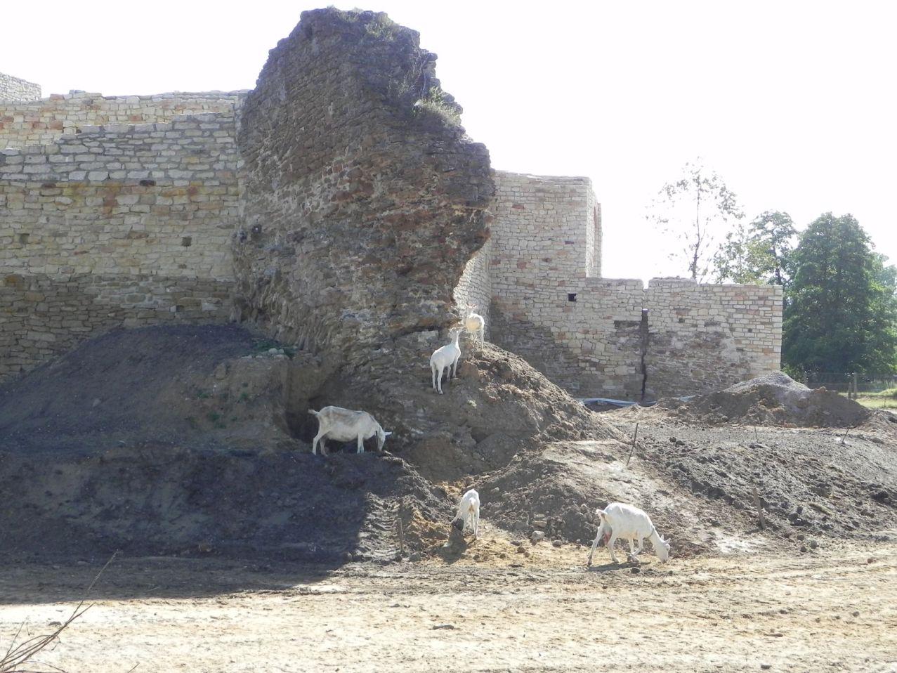 2012-07-22 Inowłódz - Ruiny zamku (61)