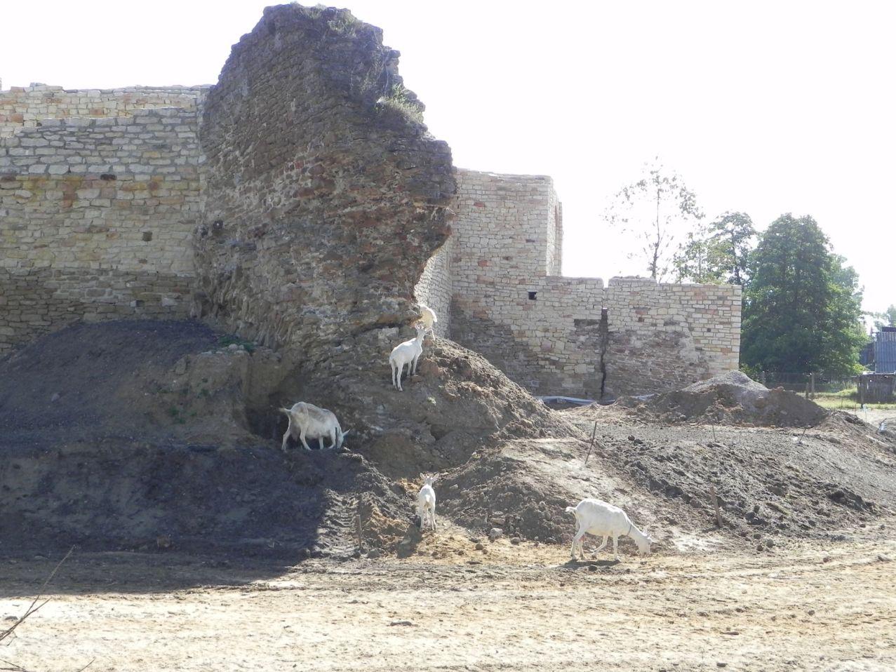 2012-07-22 Inowłódz - Ruiny zamku (62)