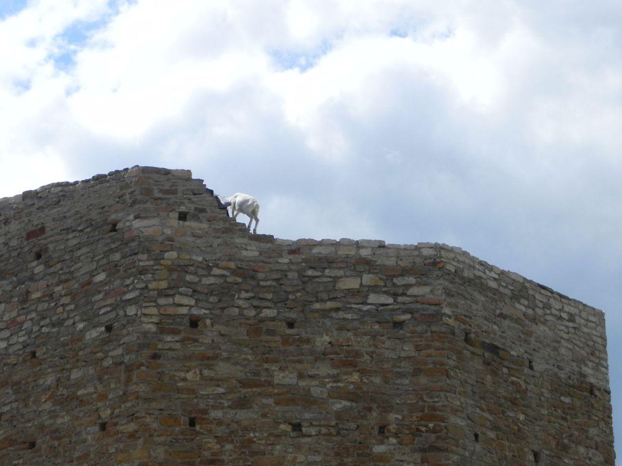2012-07-22 Inowłódz - Ruiny zamku (69)