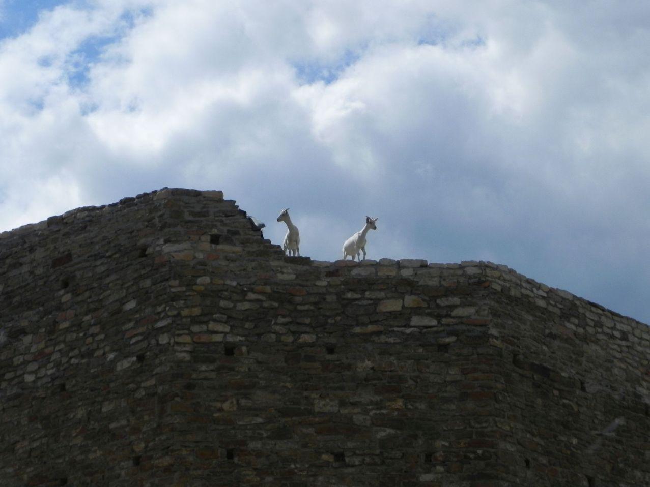2012-07-22 Inowłódz - Ruiny zamku (70)