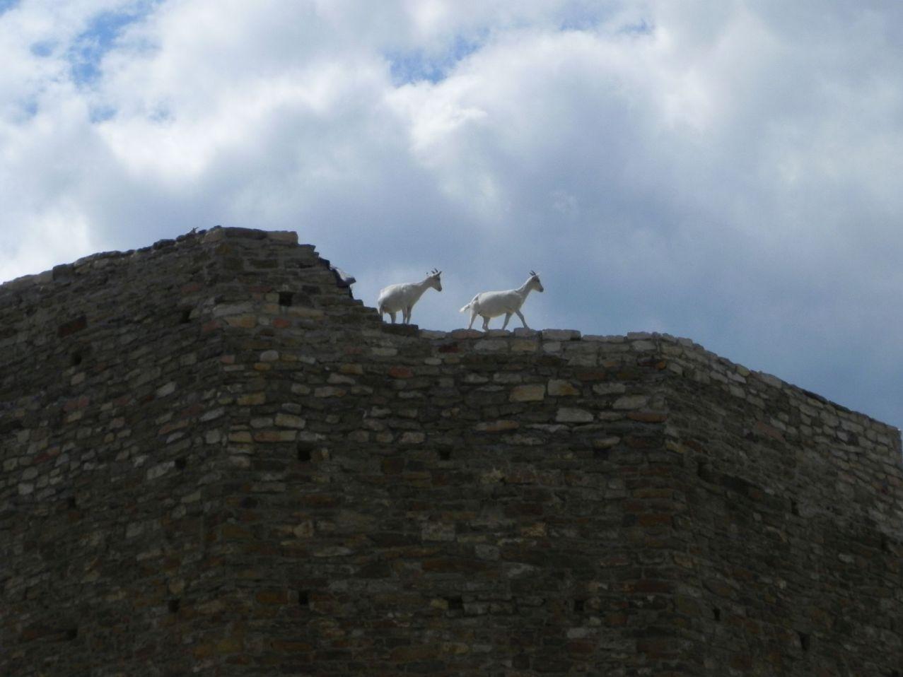2012-07-22 Inowłódz - Ruiny zamku (71)