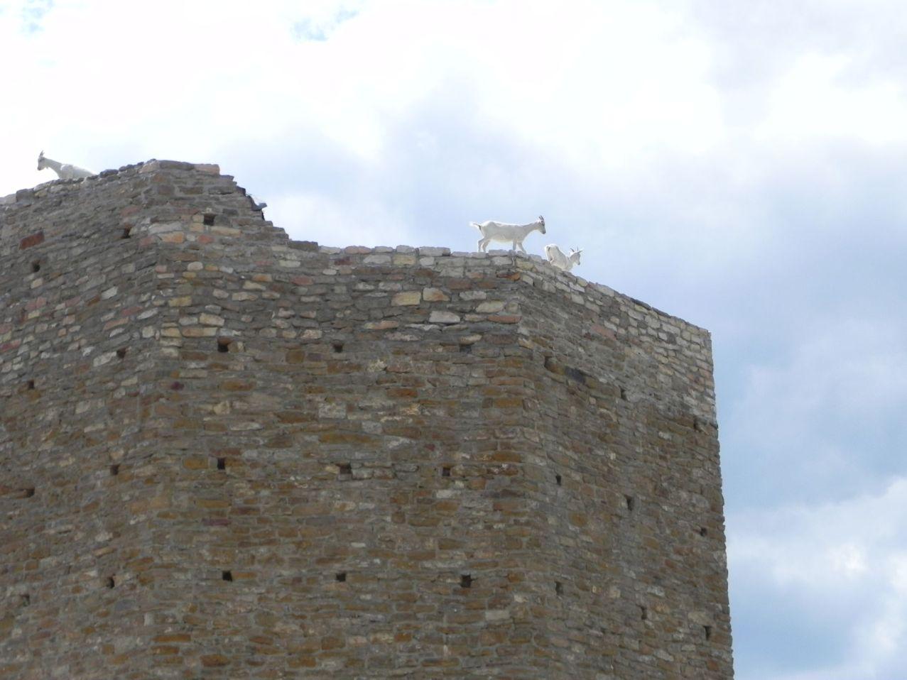 2012-07-22 Inowłódz - Ruiny zamku (72)