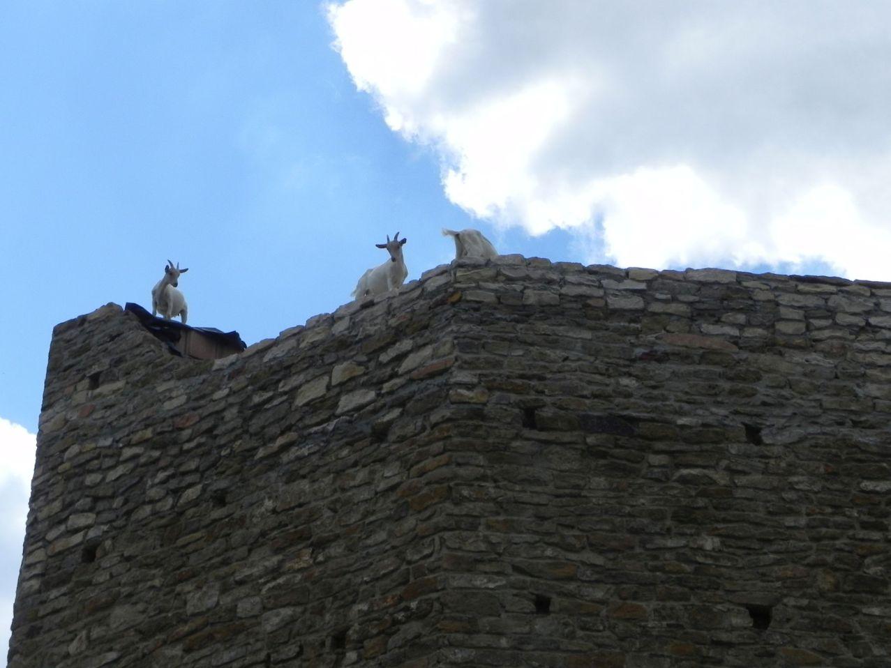 2012-07-22 Inowłódz - Ruiny zamku (78)