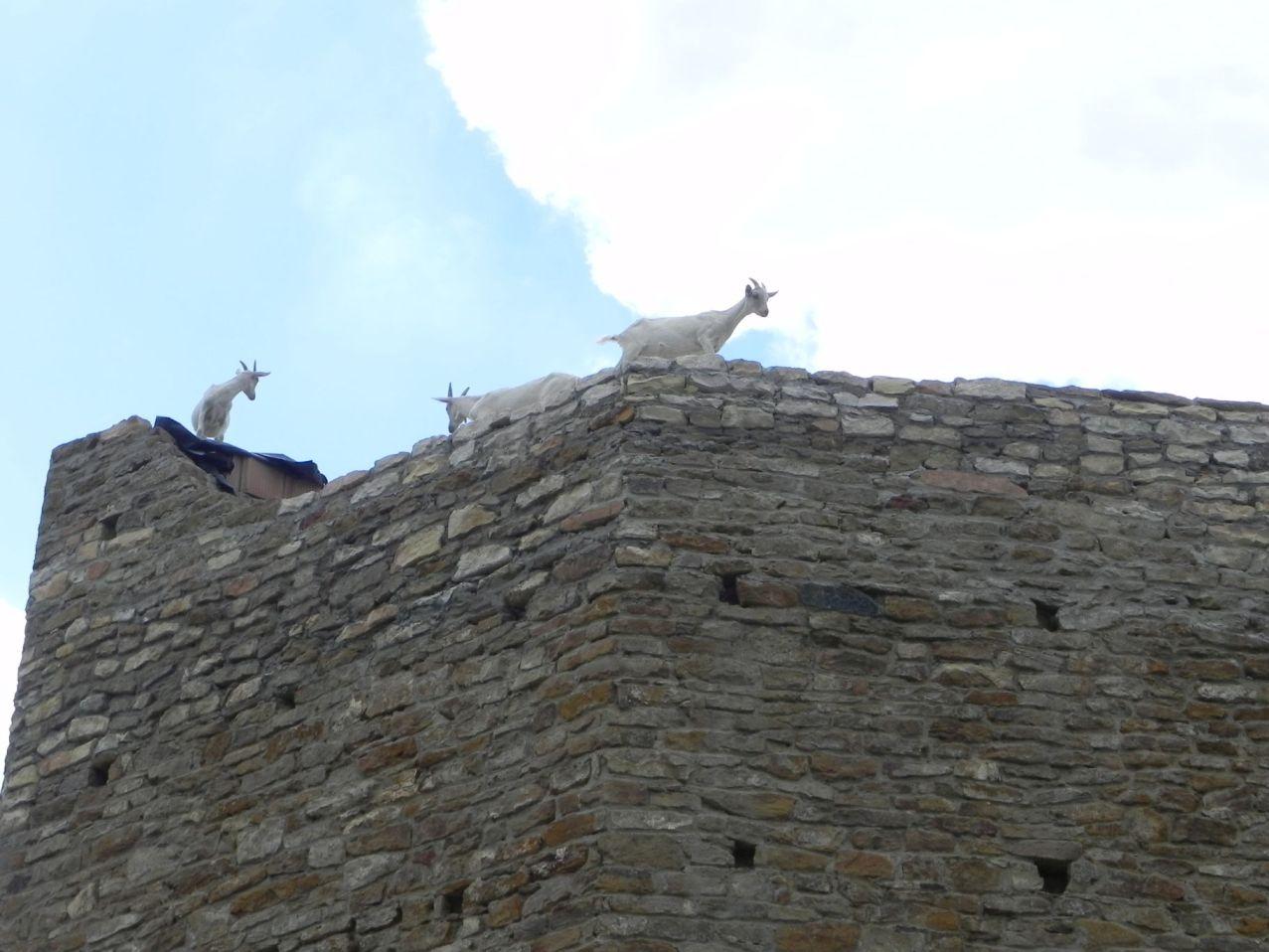 2012-07-22 Inowłódz - Ruiny zamku (79)