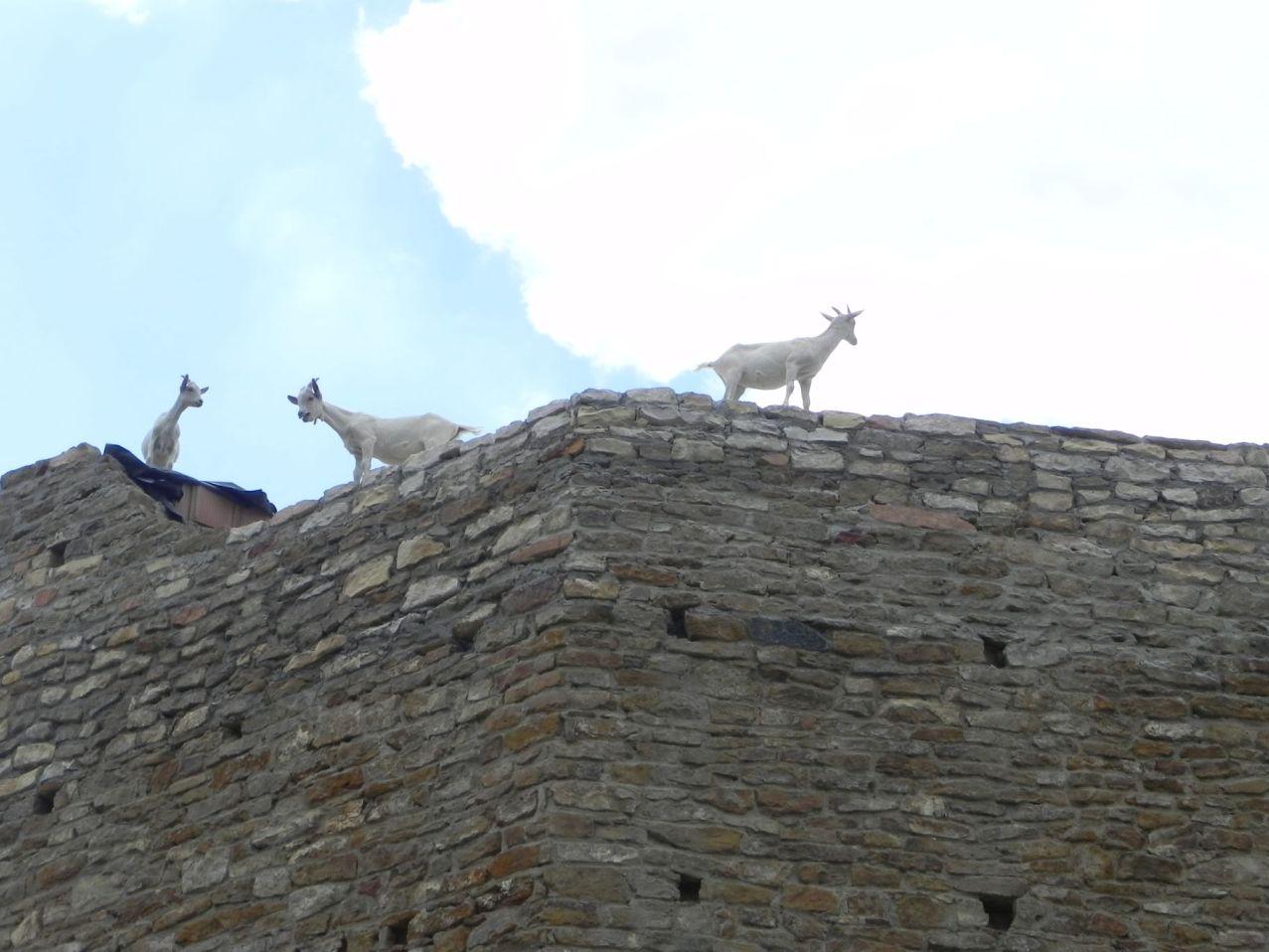 2012-07-22 Inowłódz - Ruiny zamku (80)