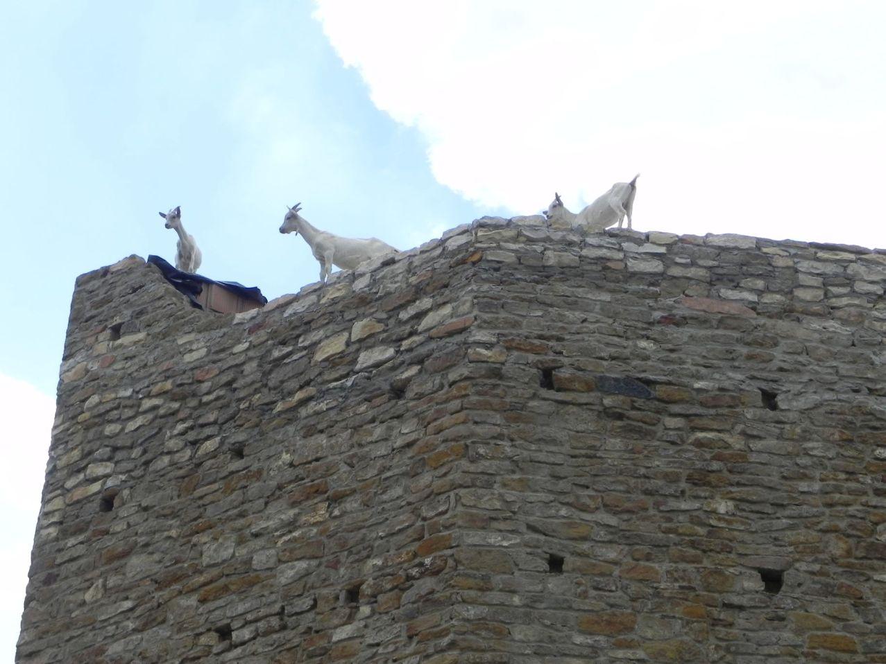 2012-07-22 Inowłódz - Ruiny zamku (81)