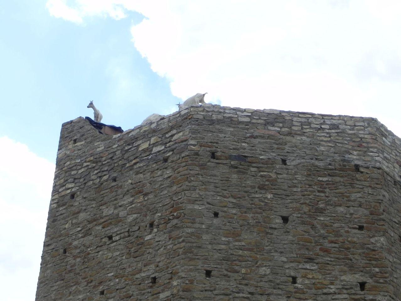 2012-07-22 Inowłódz - Ruiny zamku (82)