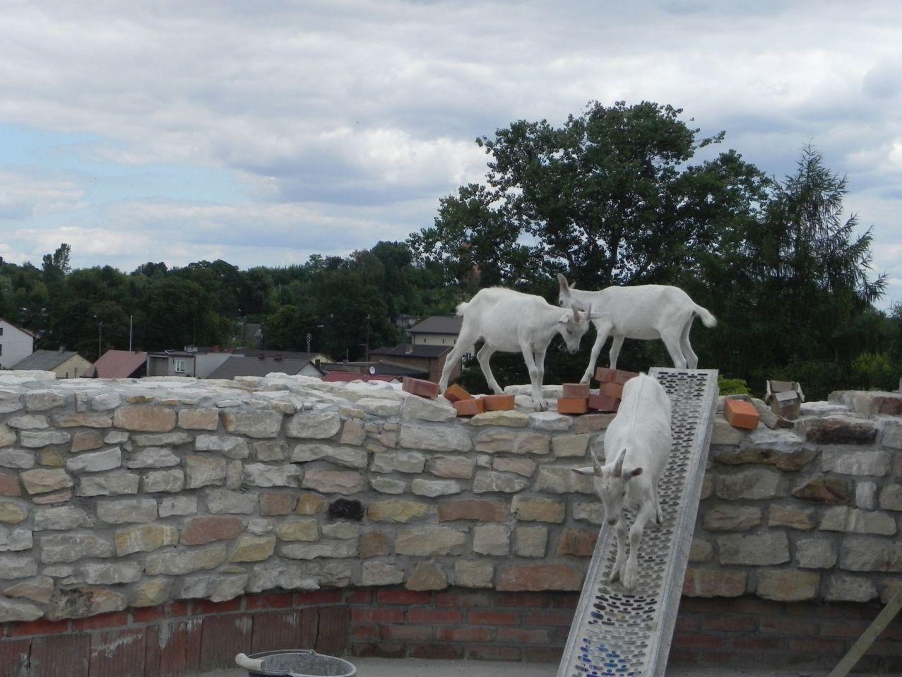 2012-07-22 Inowłódz - Ruiny zamku (92)