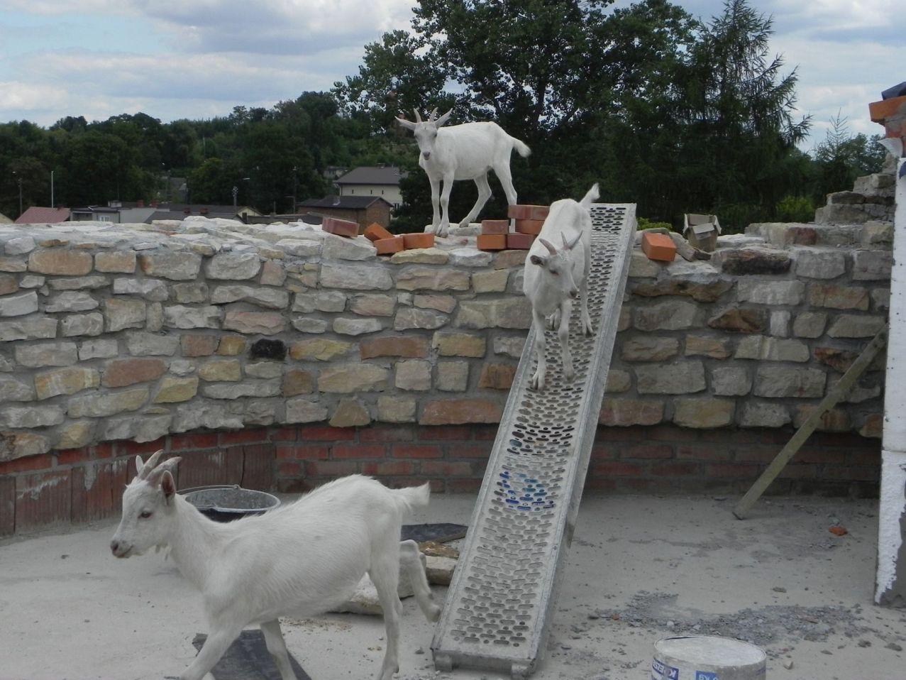 2012-07-22 Inowłódz - Ruiny zamku (93)