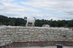 2012-07-22 Inowłódz - Ruiny zamku (88)