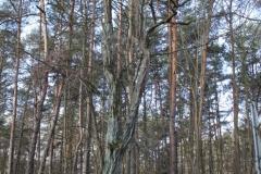 2019-03-10 Spała kapliczka nr1 (10)