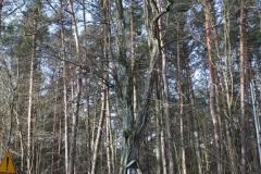 2019-03-10 Spała kapliczka nr1 (2)