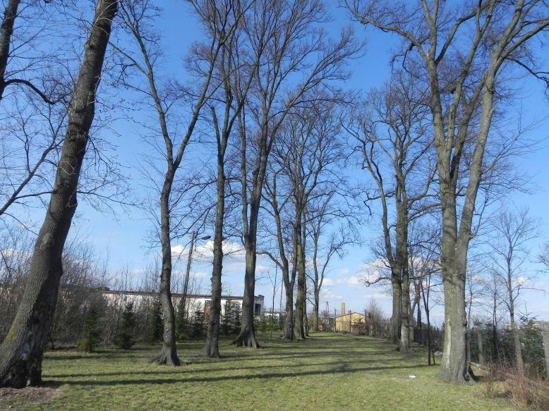 2018-04-05 Bartoszówka - pałac (6)