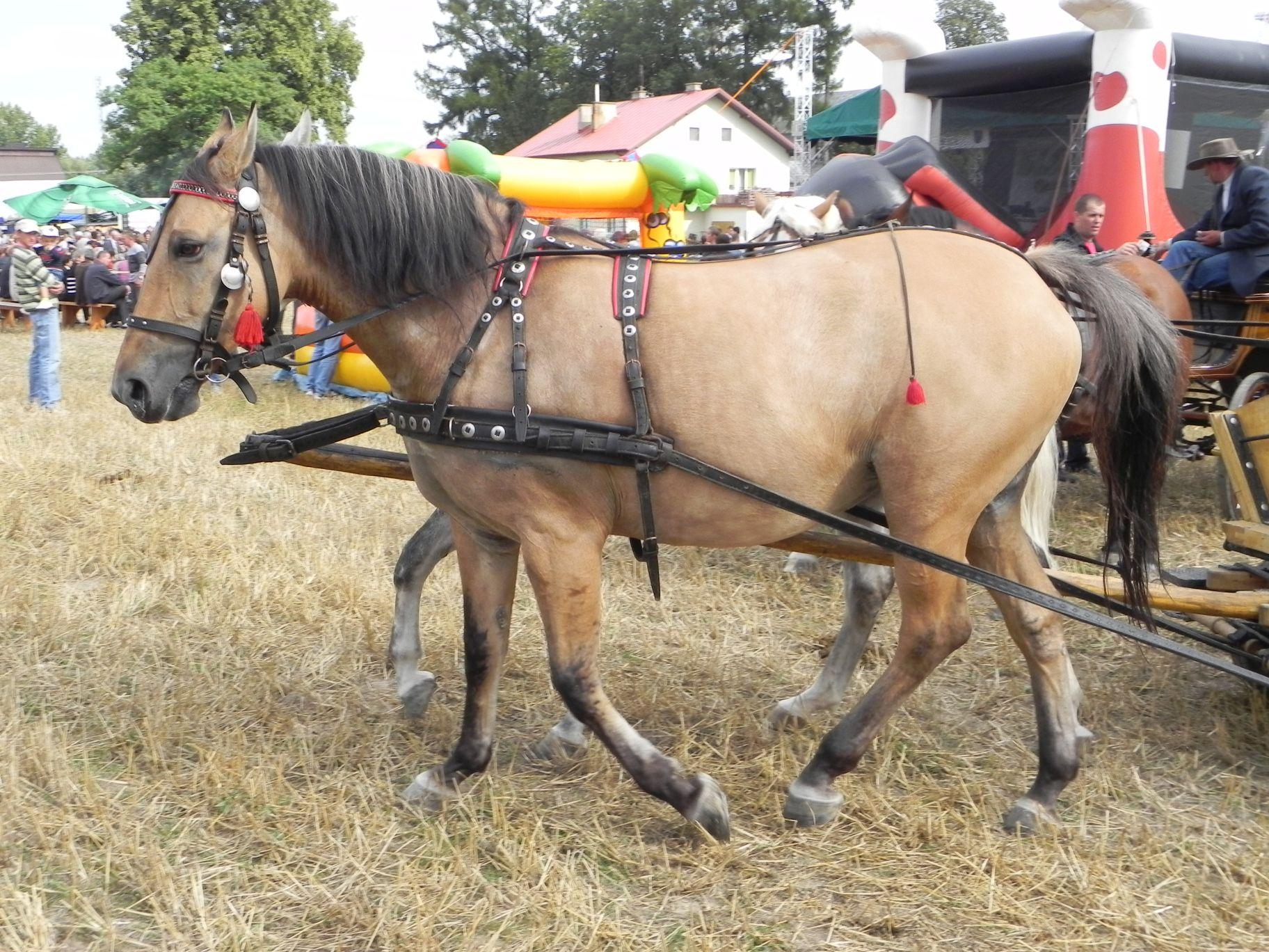 2012-08-16 Sadkowice - dożynki (82)