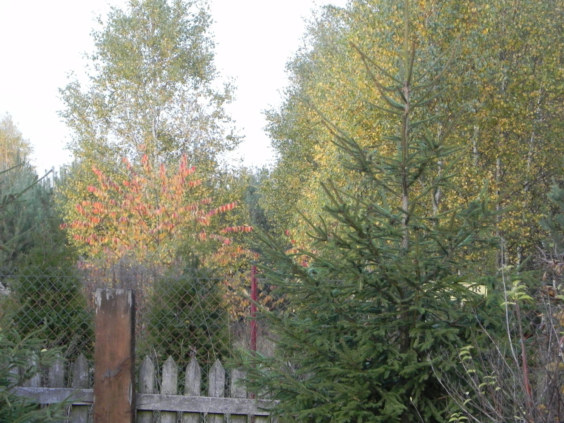 2012-10-27 Tkaczewska Góra - Synowcówka (119)