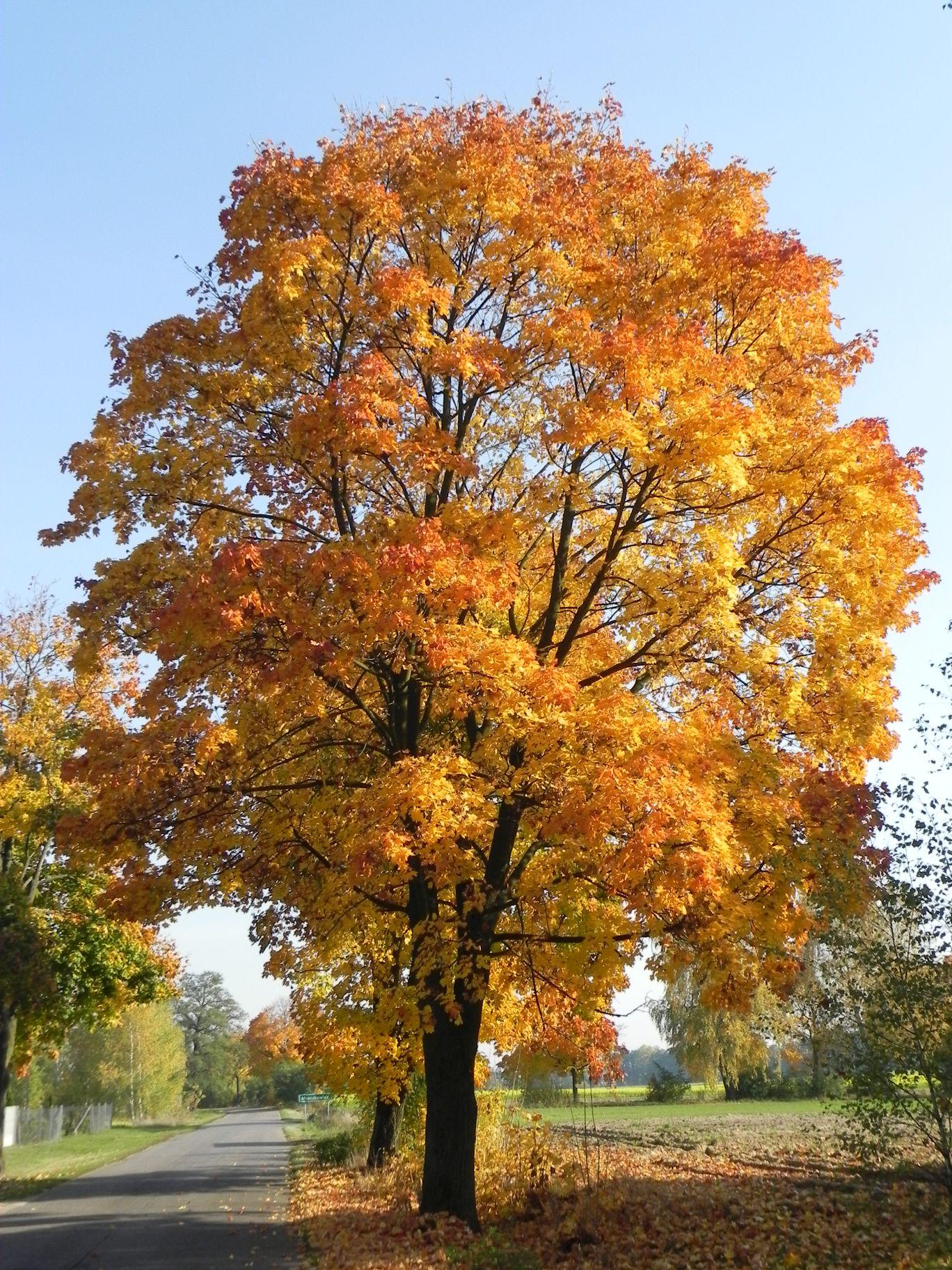 2012-10-27 Tkaczewska Góra - Synowcówka (2)