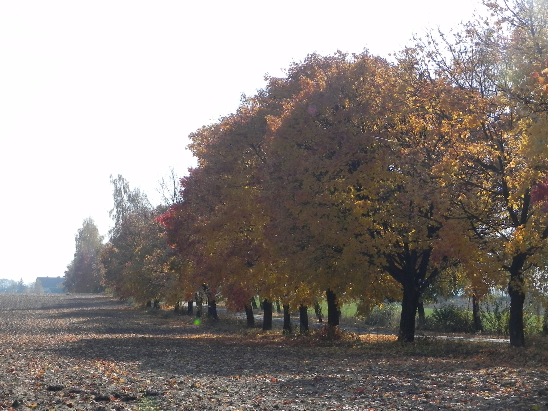 2012-10-27 Tkaczewska Góra - Synowcówka (5)