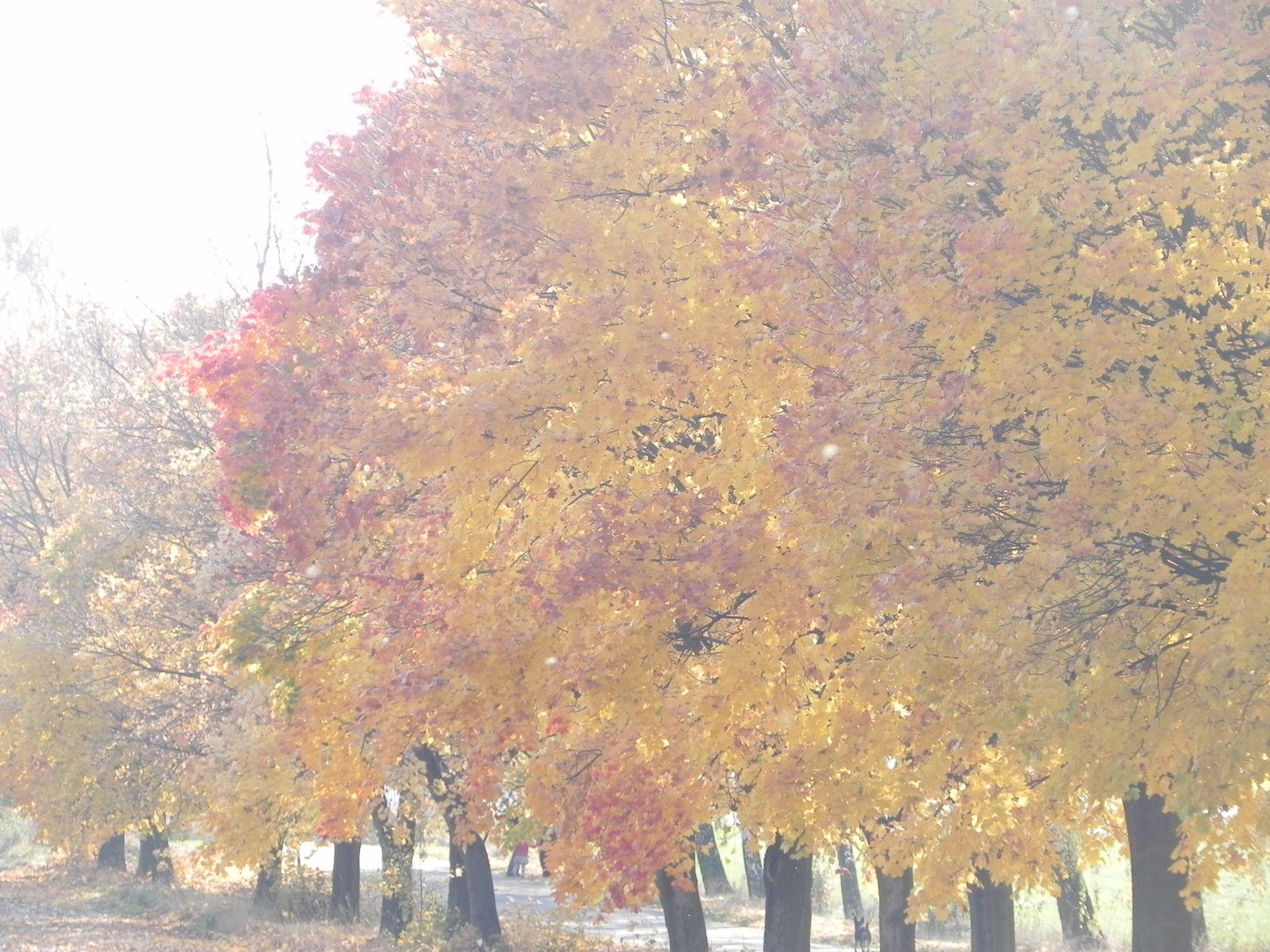 2012-10-27 Tkaczewska Góra - Synowcówka (6)