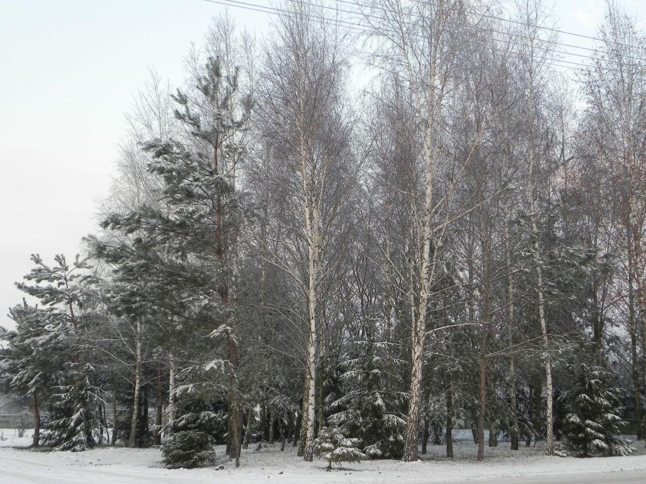 Galeria zdjęć Sochowej Zagrody - podwórko i przyroda (140)