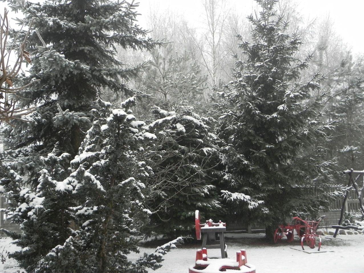 Galeria zdjęć Sochowej Zagrody - podwórko i przyroda (108)