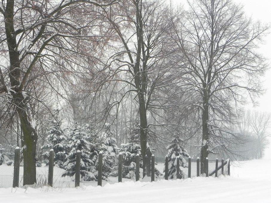 Galeria zdjęć Sochowej Zagrody - podwórko i przyroda (36)
