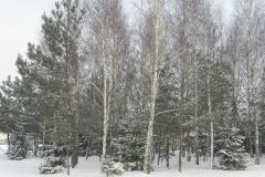 Galeria zdjęć Sochowej Zagrody - podwórko i przyroda (9)