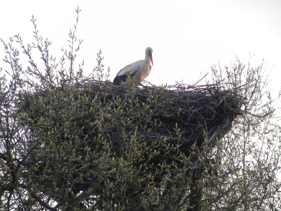 Galeria zdjęć Sochowej Zagrody - podwórko i przyroda (62)
