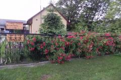 Galeria zdjęć Sochowej Zagrody - podwórko i przyroda (102)