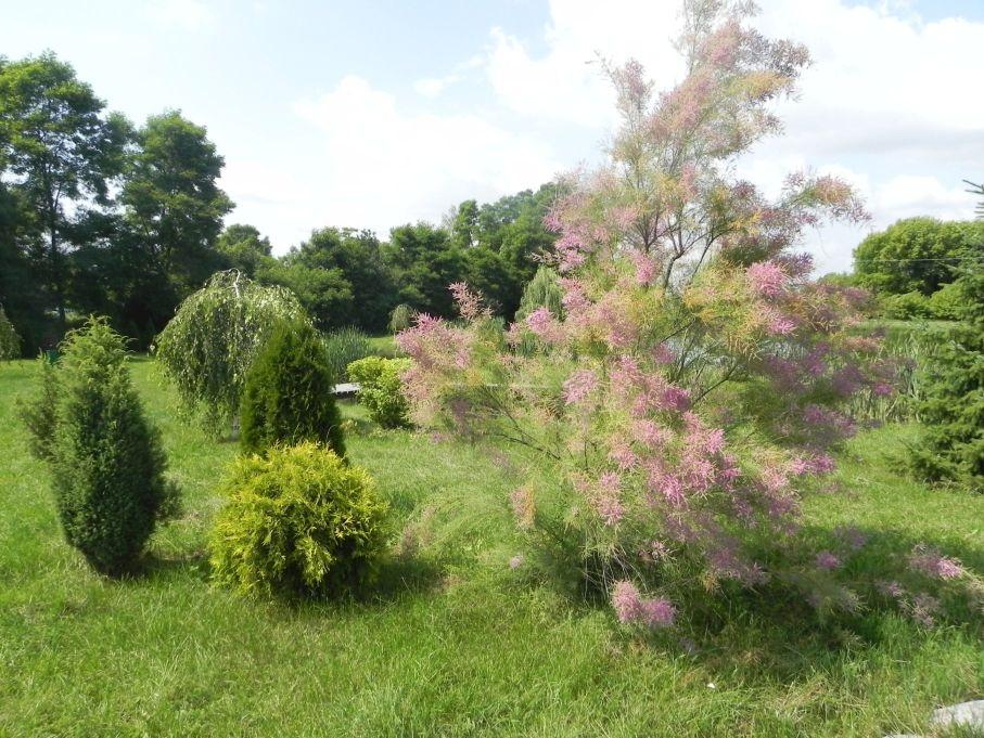 Galeria zdjęć Sochowej Zagrody - podwórko i przyroda (149)