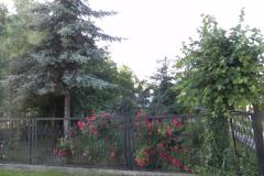 Galeria zdjęć Sochowej Zagrody - podwórko i przyroda (120)