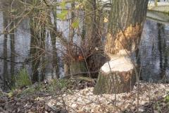 Galeria zdjęć Sochowej Zagrody - podwórko i przyroda (210)