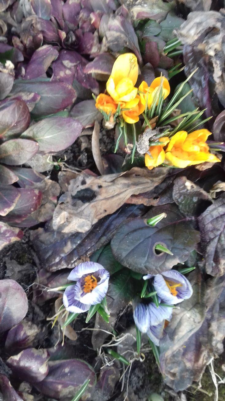 Galeria zdjęć Sochowej Zagrody - podwórko i przyroda (5)