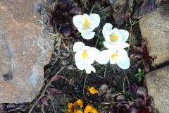Galeria zdjęć Sochowej Zagrody - podwórko i przyroda (1)