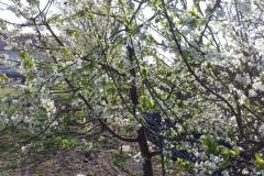 Galeria zdjęć Sochowej Zagrody - podwórko i przyroda (16)