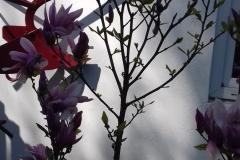 Galeria zdjęć Sochowej Zagrody - podwórko i przyroda (30)