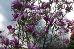 Galeria zdjęć Sochowej Zagrody - podwórko i przyroda (32)
