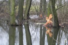 Galeria zdjęć Sochowej Zagrody - podwórko i przyroda (13)