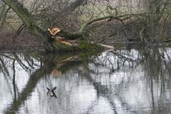 Galeria zdjęć Sochowej Zagrody - podwórko i przyroda (14)
