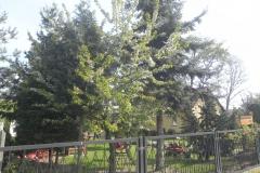 Galeria zdjęć Sochowej Zagrody - podwórko i przyroda (57)