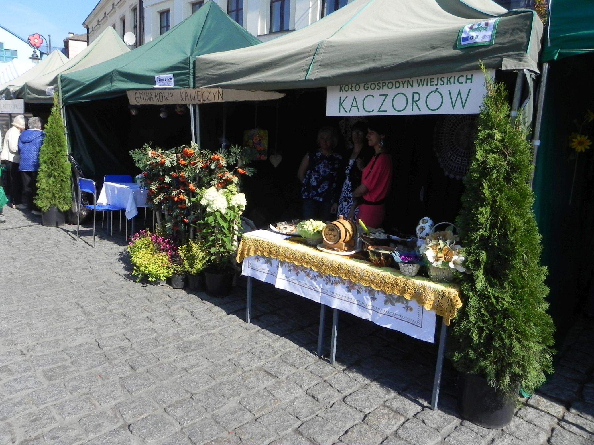 2015-09-20 Skierniewice - święto kwiatów (8)