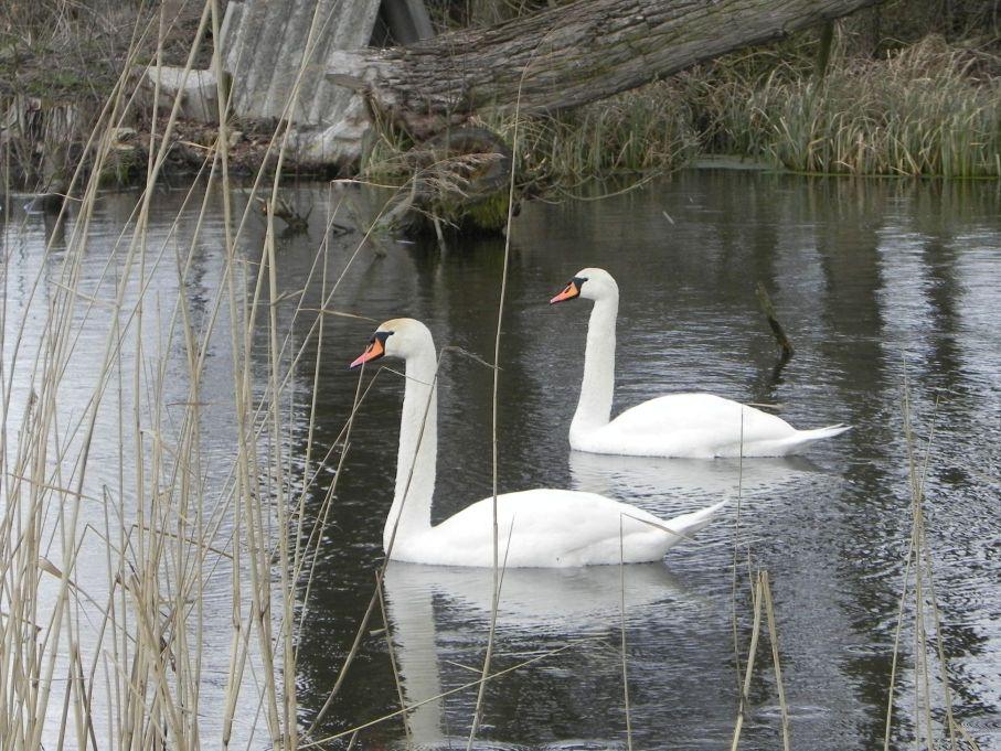 Galeria zdjęć Sochowej Zagrody - podwórko i przyroda (21)