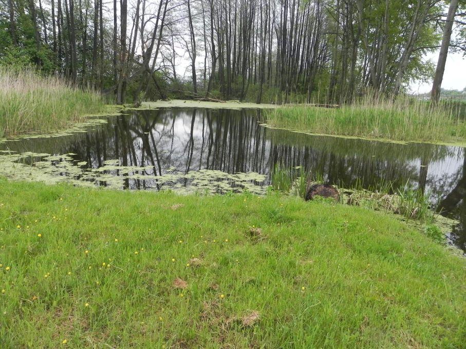 Galeria zdjęć Sochowej Zagrody - podwórko i przyroda (63)