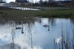 Galeria zdjęć Sochowej Zagrody - podwórko i przyroda (31)