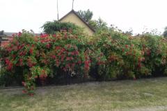 Galeria zdjęć Sochowej Zagrody - podwórko i przyroda (142)