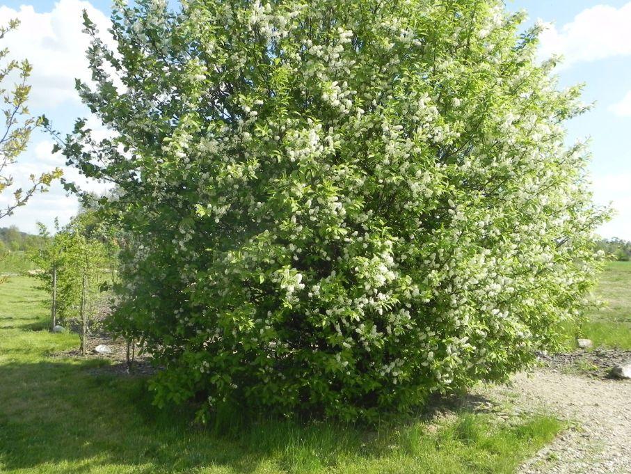 2016-05-07 Kamionka - Wiska Garncarska (58)