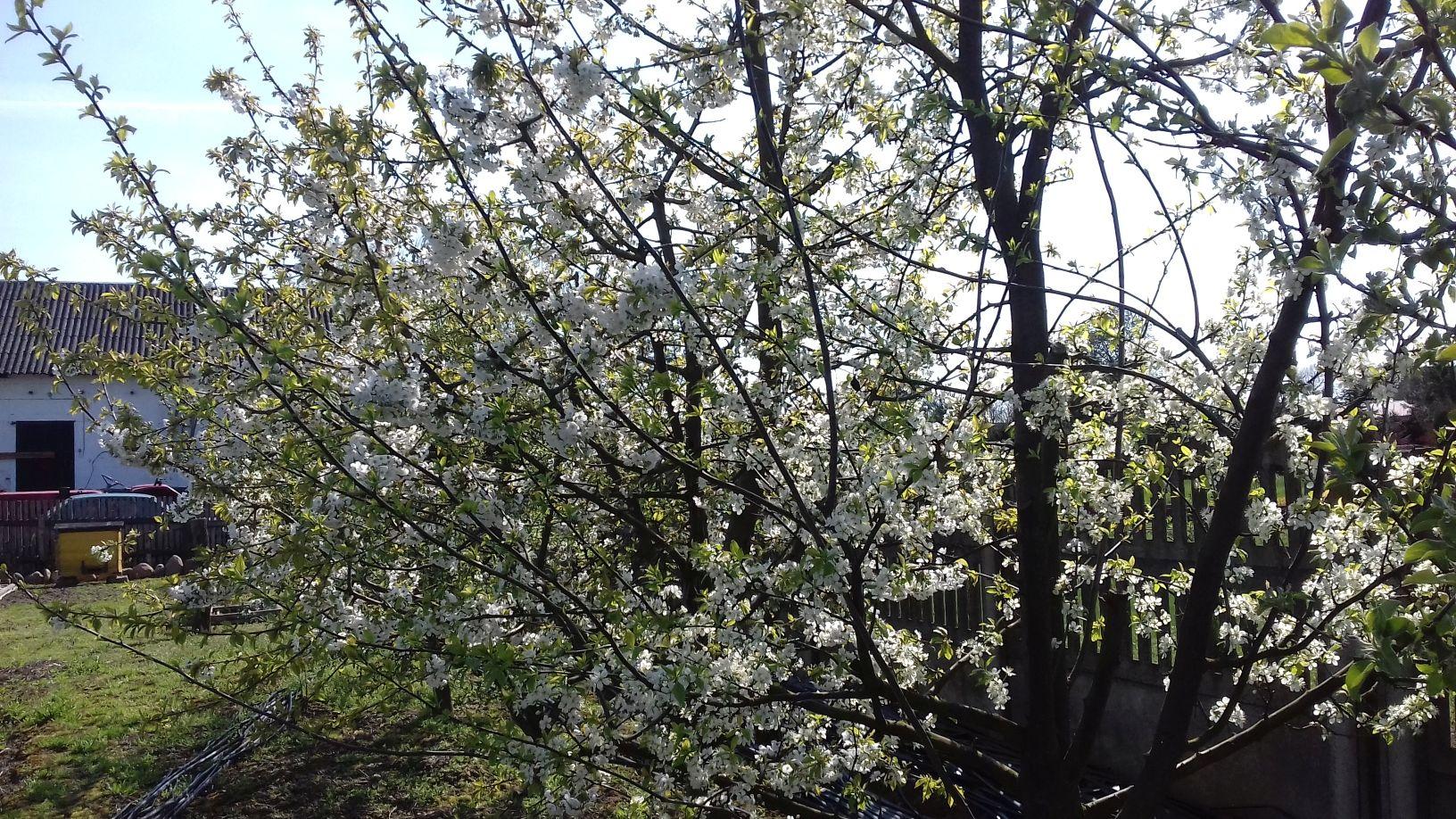 2018-04-15 Wiosna w Sochowej Zagrodzie (18)